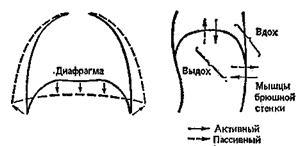 Артроз голеностопного суставами