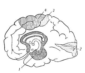 триумфов неврология скачать бесплатно 2007