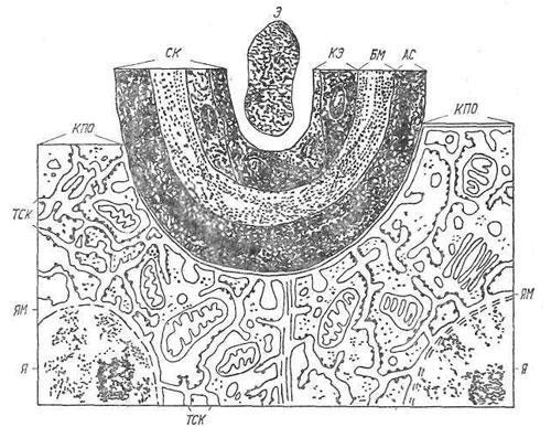 Схема структуры