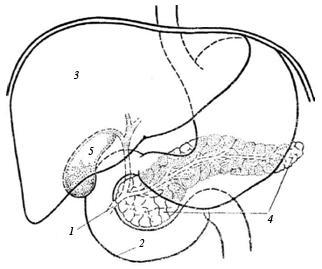 тонкий кишечник от паразитов