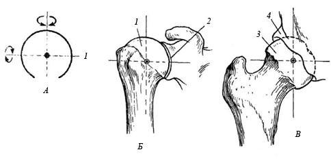 Движение в суставах техника протезирования коленного сустава