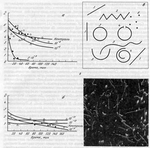 Характеристики подвижности сперматозоидов и влияние ХС на среднюю скорость их движения