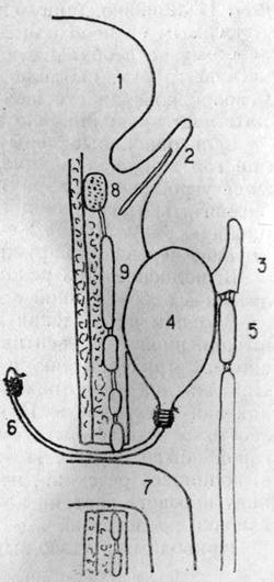 Надувной резиновый обтуратор