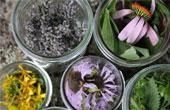 Фармакологические свойства трав входящих в грудной сбор