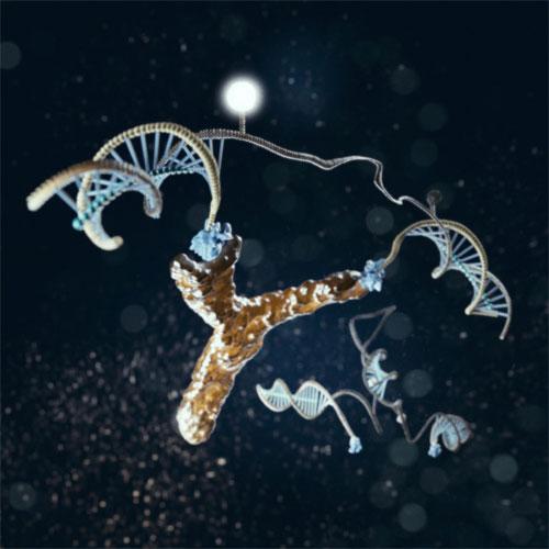 Аутоиммунные антитела