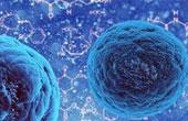 Стволовые клетки в медицине. Что это и как их использовать?