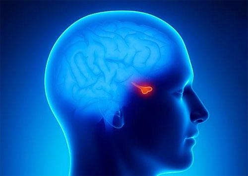 Гормоны, вырабатываемые эндокринными железами