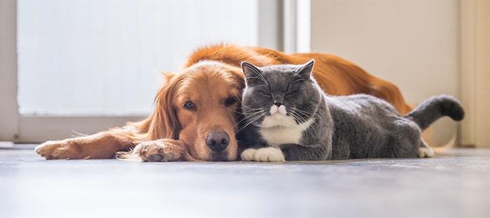 Анализ крови домашних животных